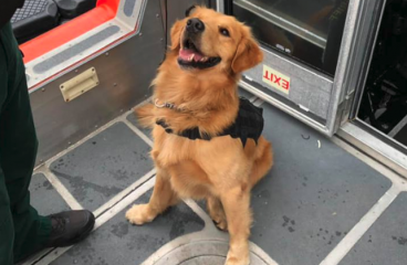 Drug-Sniffing K9 Overdoses While Screening For Holy Ship